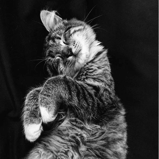 オフィスのソファで休憩を取っていたら、迷い込んできた子猫が膝に飛び乗ってきた・・・あれから1年・・・また?