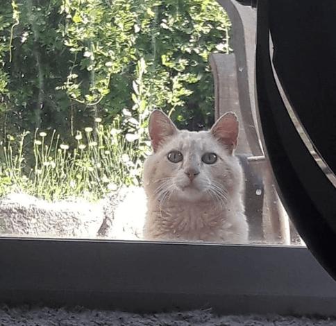 友人と暮らす新しい家で見つけた前の家主の置手紙。 『裏庭の猫のお世話を続けてくれたらとても嬉しいです。』