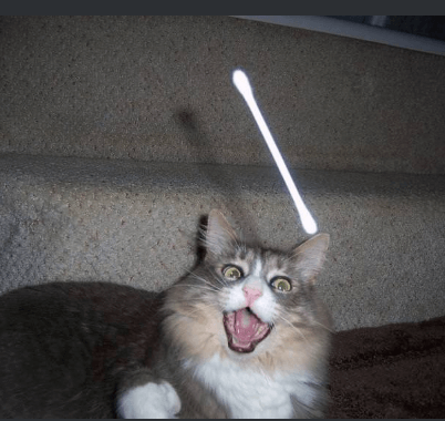 『私は私の猫に綿棒を投げるのが好きです。』掲示板に投稿された飼い主さんが投げる綿棒をキャッチしようとする猫
