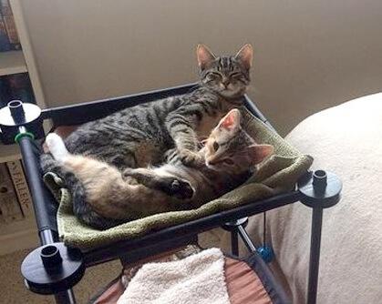 新生活のため実家を出ていた男性が1年後に帰ってみると自分の部屋が可愛い猫の部屋になっていた?!
