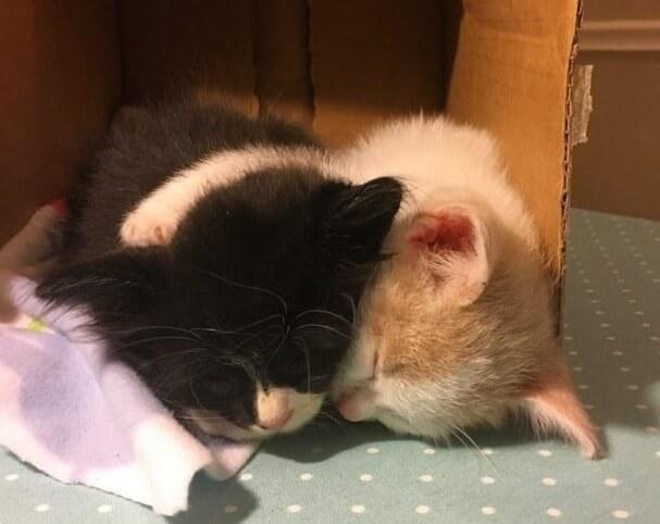 いつも愛情が欲しくて温もりを求めていた野良の子猫。保護されて親友に出会うととっても幸せな表情に変化する。