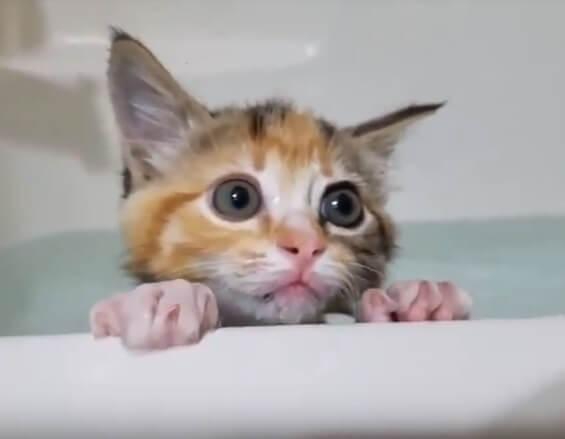 あらまあ!ほっこり♡赤ちゃん猫たちの初めての入浴タイム♪みんな意外に慣れてる?猫が水嫌いだニャンて誰が言ったぁ~~