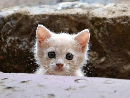ケニアで出会った痩せた子猫。NPOで働いていた男性のかけがえのない存在になり心を救う…