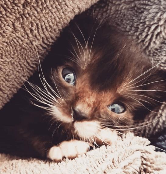 生後3週でフォースプーンと同じ大きさの小さな子猫。兄弟の半分の大きさしかない子猫がたくさん食べて・・・