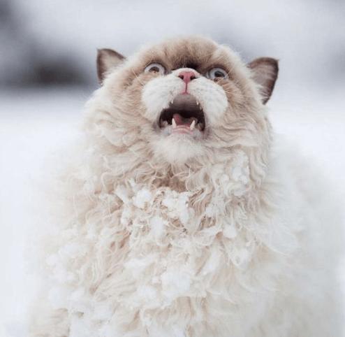 あなたの猫にもその瞬間はきっとある・・・動物の中で猫ほどドラマチックなものはきっといない
