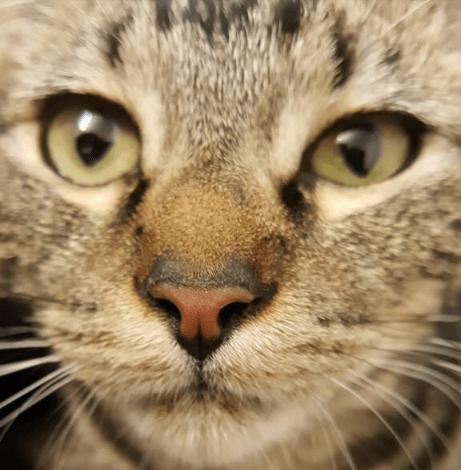 3歳の我が家の猫が裏口で食べ物を探している小柄な迷い猫を見つけた。シャイな猫が何度も通ってきたわけ