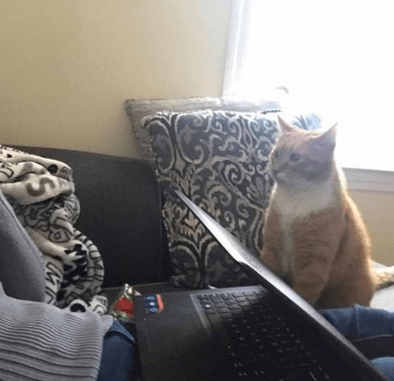 ある朝目覚めたときママは気付いた・・・じっと私を見詰める視線。去年家族に加わった猫の止まらないママへの愛