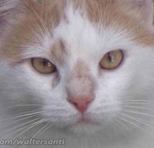 2週間前父の家から引っ越した私はときどき庭の猫たちに会いに行く。監視カメラでずっと見ていることを君らは知らない