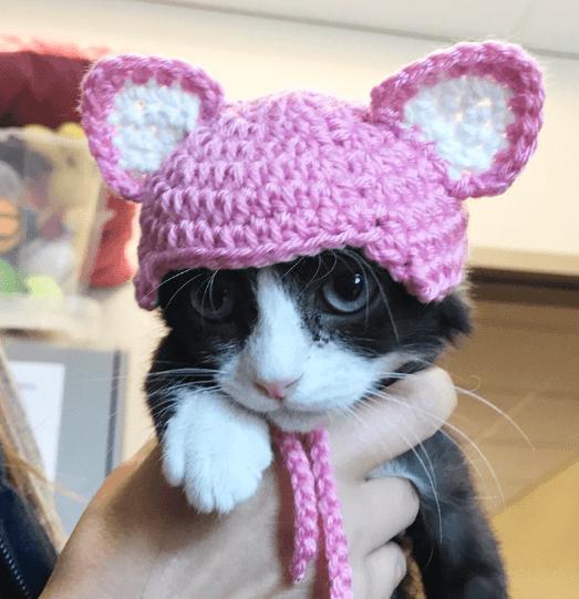 耳と尾を切断され人間への信頼を失った子猫に愛されていると感じて生きてほしい・・・シェルターの人々の願い