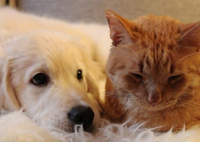 新入りの子犬を家族と認めず拒み続ける先住猫。負けずにグイグイとかまって攻撃してくる子犬に1ヶ月後ついに…