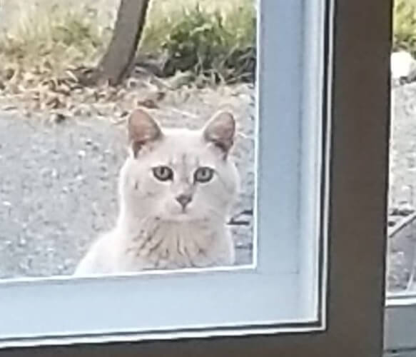 新居に引っ越しするとキッチンに置手紙が…ふと視線を感じた方を見ると窓の外から1匹の猫が見つめていた!