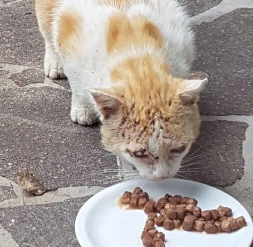 愛猫を亡くした夫婦が庭に現れたフレンドリーな野良猫を家族に迎えるとさらに人を恐れる野良猫がやってきた。その結末とは…