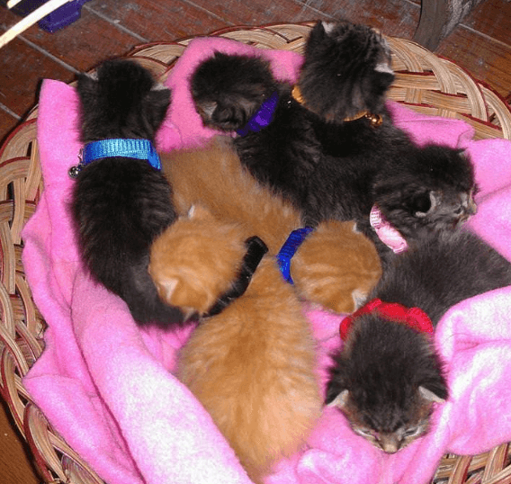 ルームメイトから預かった2匹の猫は1匹が私を嫌い、もう1匹は1週間後に7匹の子猫を出産。その時私の犬は・・・