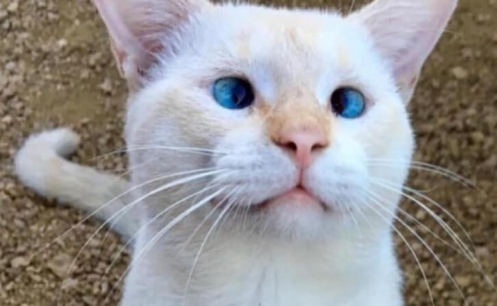 地元で人気者!フードコートに住みつく野良猫。しっぽにケガをしているのが見つかり助けようと捕獲作戦が始まった…