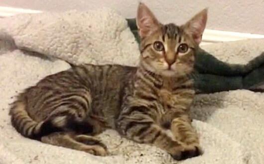 帰宅するとお風呂の浴槽に見知らぬ子猫がいた。二度の親友の死を乗り越えた愛犬がどうやら連れて来たらしい…