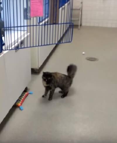 「あれ?おかしいニャ??」何度もジャンプに失敗する猫さん。納得いかない猫さんは何度もトライするがまた失敗…それには理由があった!