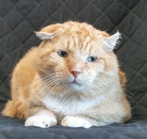 お腹がペコペコで我慢出来ずに捕獲器に入った野良猫。とっても恥ずかしがり屋な猫のお気に入りはほっぺをモフモフされることだった…
