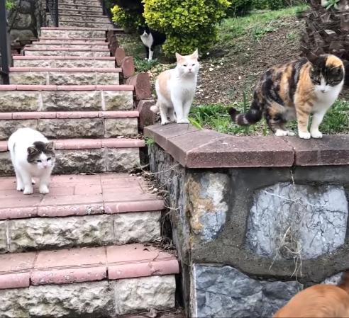 隣人の家との境にある階段が庭の猫たちの防衛線。隣人の飼い犬がときどき庭へ侵入を試みるけど…
