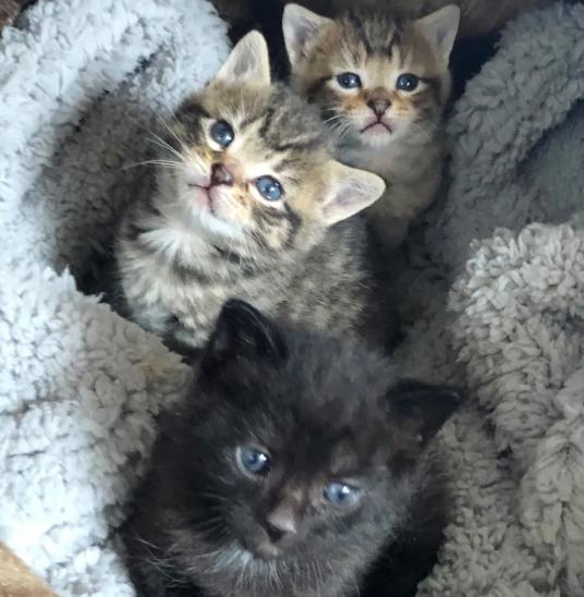 民家の裏庭で近所の人に発見された野生の母猫と生後間もない3匹の子猫を救いたい