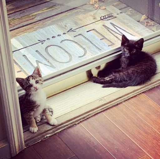 それぞれ優しい人たちに助けられ、里親さんの家で出会ったひとりぼっちの2匹の子猫