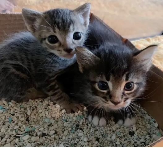 シェルターに運ばれたキャリーケースの中でタオルの下に隠れていたもう1匹の子猫