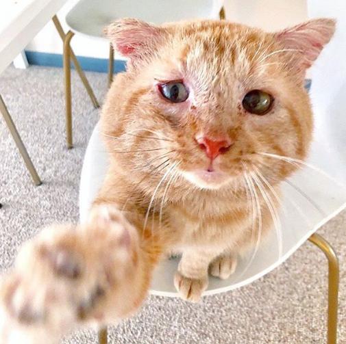 『ぼくを忘れないで』シェルターで出会いを待つ猫の写真に添えられたメッセージ