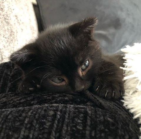 引き取りに行った『無料の子猫』の後ろに眠っていたハーフサイズの子猫