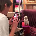 レンズを向けた瞬間に最高のほほえみを向けた子猫
