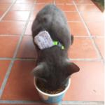 見覚えのない首輪をつけて帰宅した私の猫。しかも、『あなた太ったんじゃない?』