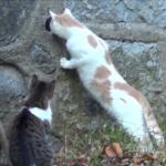 その一瞬が真剣そのもの。見飽きることのない猫の日常