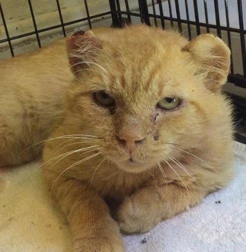 人間に信頼を置くことをためらう通りから救助されたシニア猫