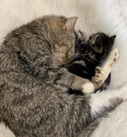 氷点下の通りから救助された生後2週間の子猫と猫のおじいちゃん