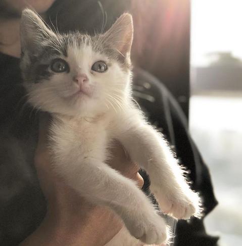 郵便局のトラックの前に走ってきた子猫と数日後に見つかった子猫の兄弟