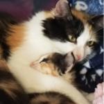 仲良くなり始めていた野良猫が家の中へ子猫を運んできた・・・