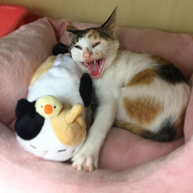 変顔の猫さん