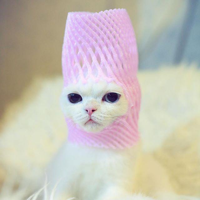【フルーツキャップ猫】フルーツキャップと猫の密着した関係。