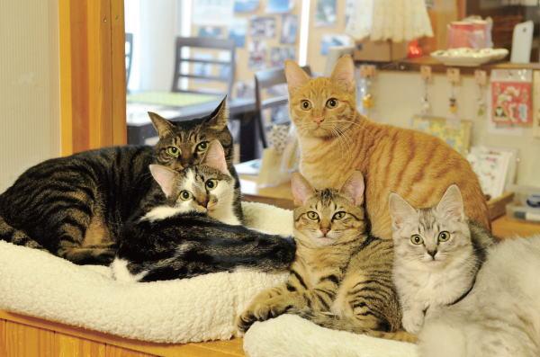 猫カフェオタクが教える!初めての人のための猫カフェの楽しみ方