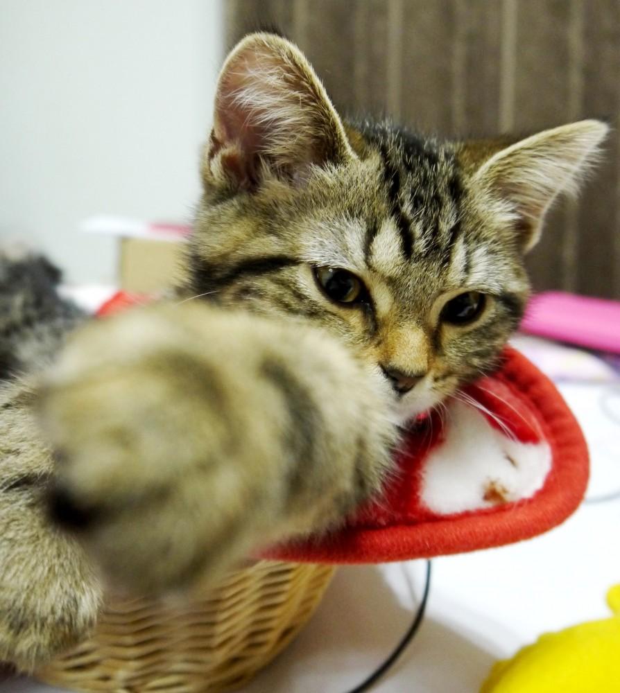 目指せ日本開催!猫達による夢の「ネコリンピック構想」というのがあるらしい
