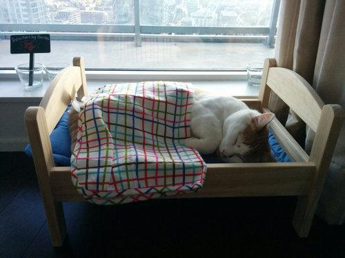可愛いすぎ!世界中のにゃんこがIKEAのドール用ベッド&お布団で熟睡中♪