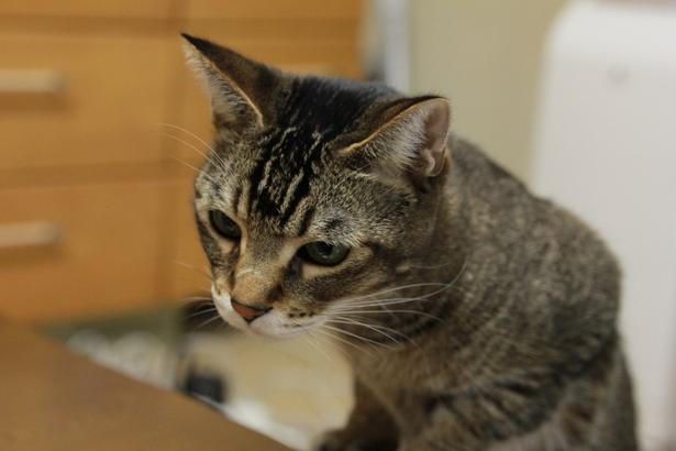 猫ちゃんの視線が気になる!目を合わせてくれないのはどうして?