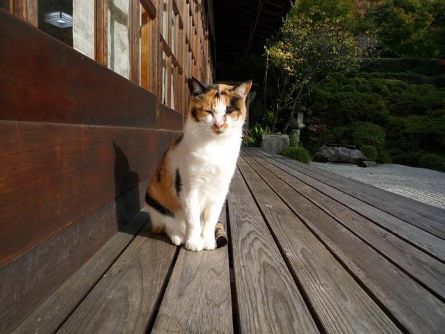 帰りたくない!?最高に癒される、全国「猫のいるお宿」5選