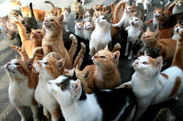 【猫好きさん必見!】ネコ好きなら1度は行ってみたい猫の楽園「青島」とは
