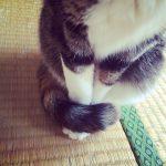 寒くなるころの風物詩!猫の「しっぽマフラー」が可愛すぎて飼い主さんたちがメロメロ