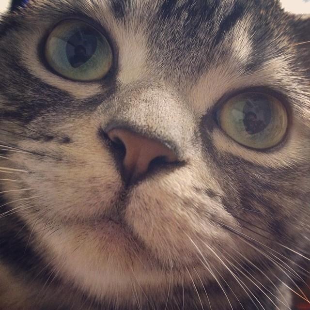 切断厳禁!猫の「ヒゲ」が持つ大切な役割を知ろう!