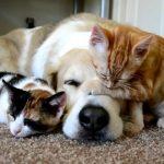 猫は他の動物とも仲良し:猫×ほかの動物動画のまとめ