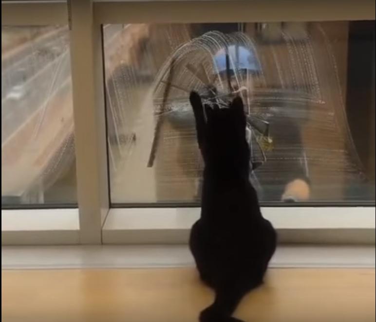 ネコちゃんは窓掃除がお好き? 窓掃除の清掃員をお手伝いするネコちゃんがかわいい件