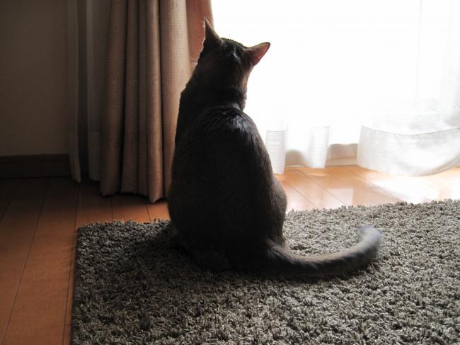 哀愁漂うシルエット。猫の後ろ姿画像集。