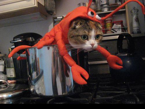 今からでも間に合う?:ハロウィンの猫用コスチューム