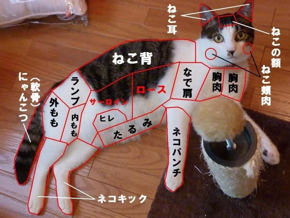 「さあ、どこが好きかにゃ?」猫好きさんが惚れた珠玉の猫パーツ