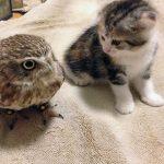 ふくろうカフェに入った新入り猫が可愛すぎる♪話題のカフェは大阪にあるんです